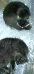 Our cats  ( The BouBous)